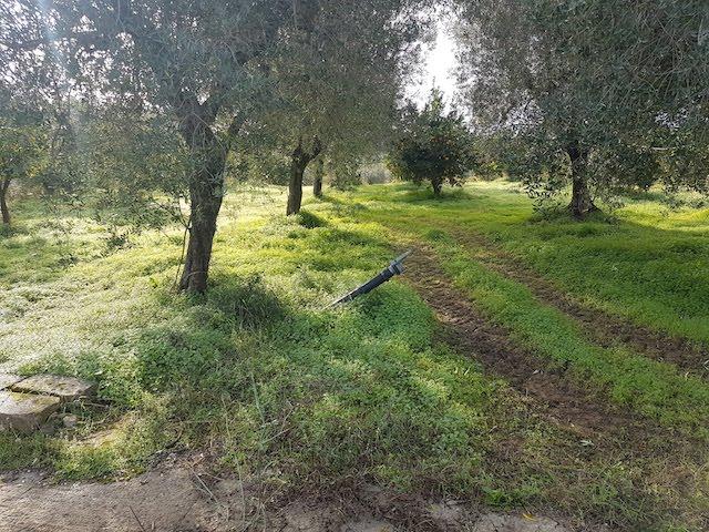 ancona-immobiliare_1397_0_1608653544.jpg